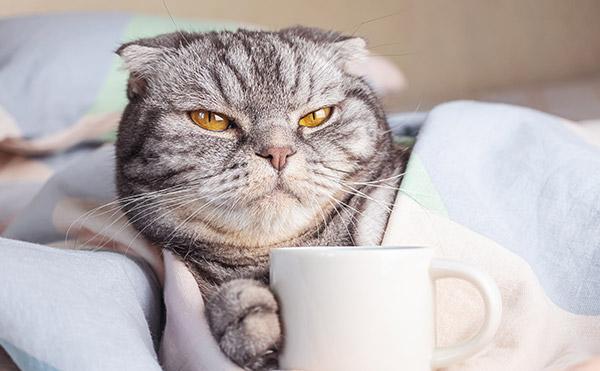 image chat café
